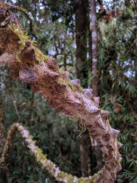 Drakenstaart op de wandeling naar het einde van de wereld (Horton Fields National Park)