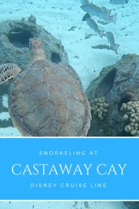 Imagine snorkeling out into the clear blue waters of the Bahamas, the water temperature a warm 25℃, the crystal clear water.   See why you should go snorkeling at Castaway Cay