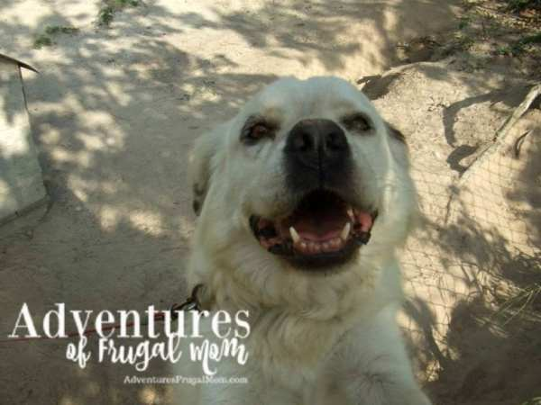 Giving Back Pet Adoption by North Carolina Lifestyle Blogger Adventures of Frugal Mom