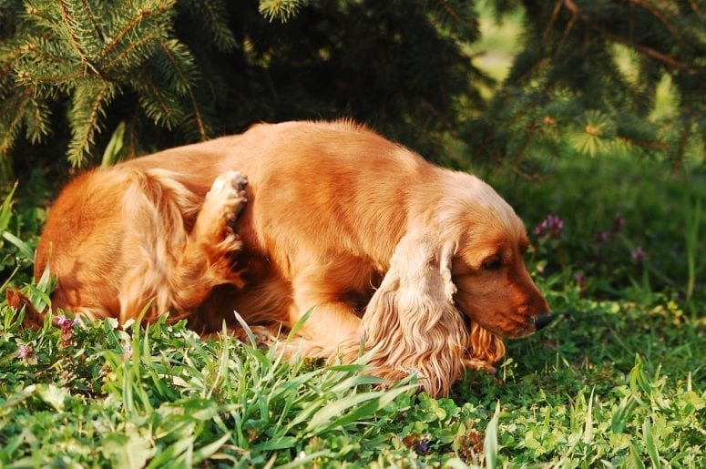 5 Potential Causes for Hot Spots on Dogs from North Carolina Lifestyle Blogger Adventures of Frugal Mom