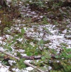 A Dander of Snow