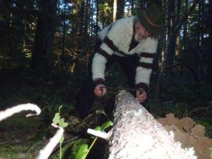 peeling a log