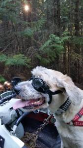 Walter Dog