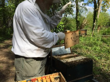 Shaking the bees in