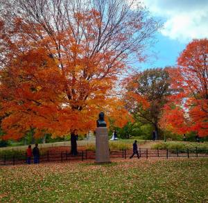 Central Park ablaze in color In a city so beautifulhellip