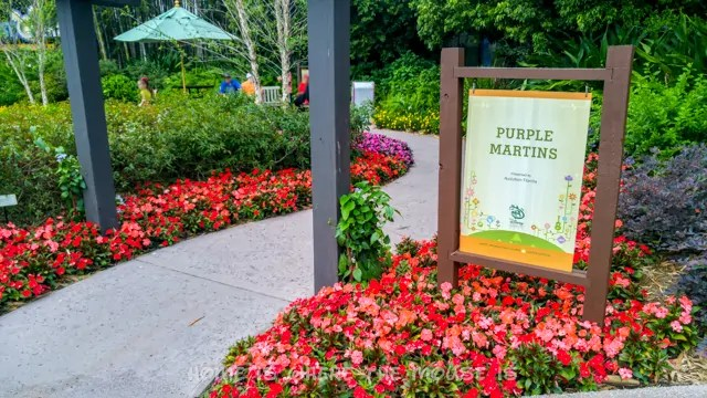 Purple Martins Garden at the Epcot International Flower & Garden Festival