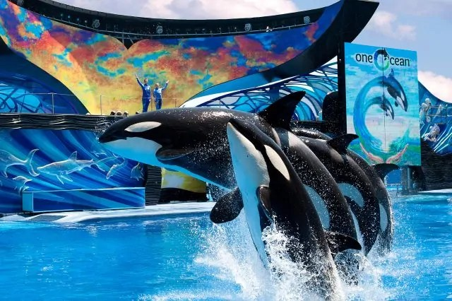 One Ocean Seaworld Orlando