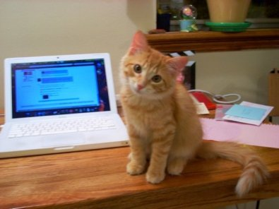 Shiya as kitten
