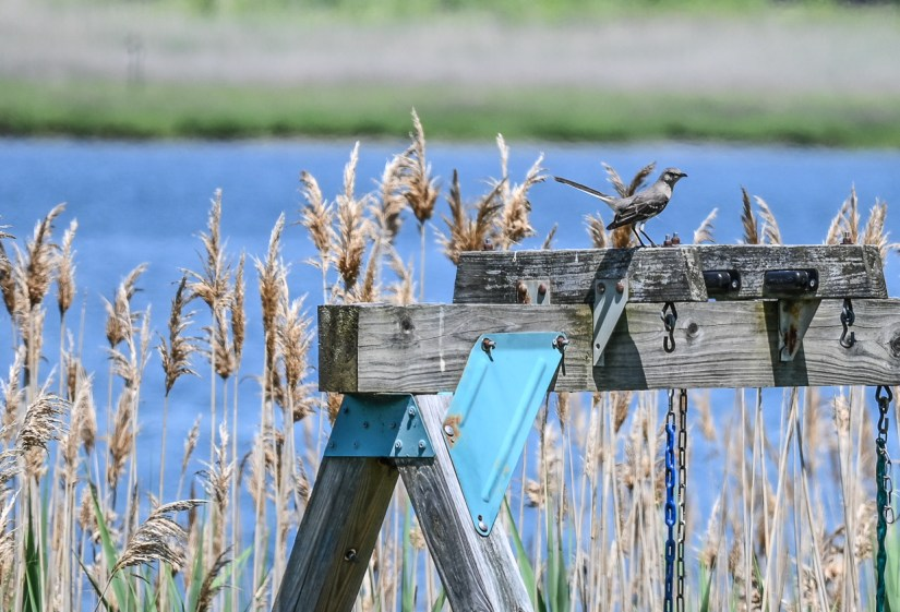 Where to see birds in Rhode Island