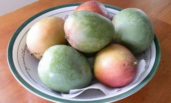MANGOES (what you need to know)