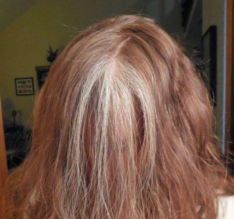 gray head sara