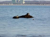 Seal12