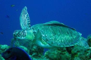 IMG_4164 turtle