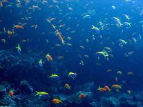 photo1430313764996 fish