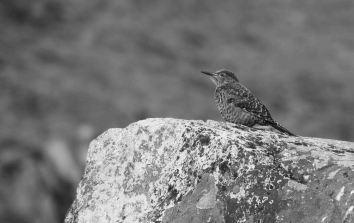 IMG_7358 bird