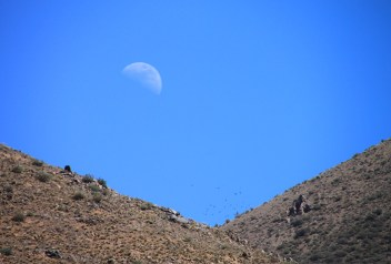 IMG_2780-moon