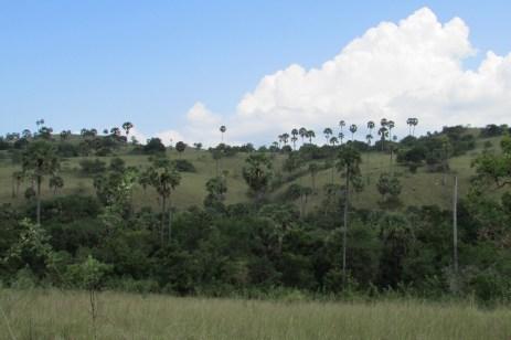 My Jurassic Park view
