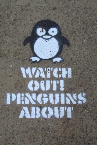 Unfortunately I didn't see any penguins on our walk but you never know?