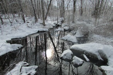 Frog Pond caught in the snow