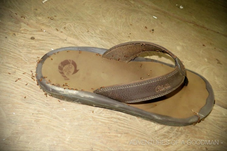 Imagine my surprise when I went to put my sandals on in the morning and found them covered in termites.
