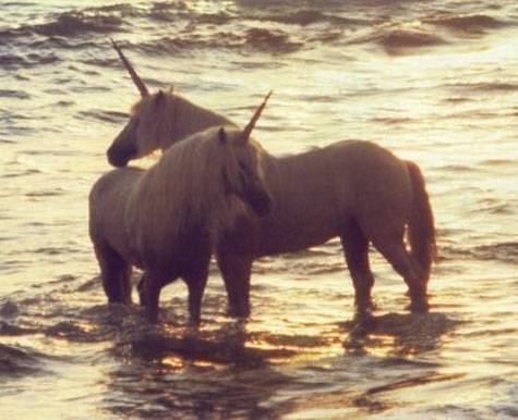 unicorns 2 salw