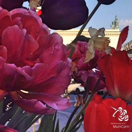 Odeonsplatz and flowers munich
