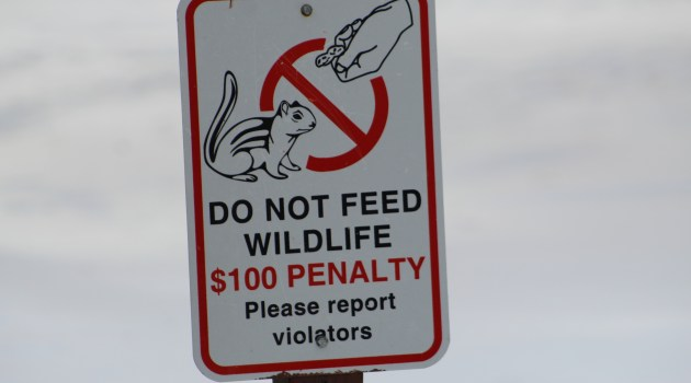 Do Not Feed the Wildlife