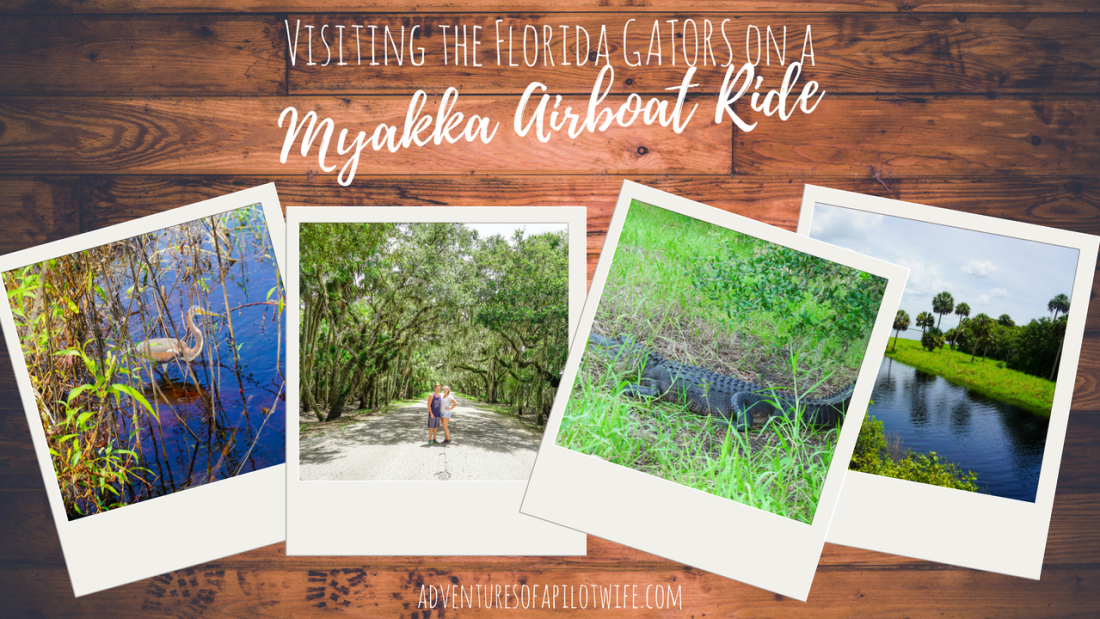 Visiting the Florida Gators ona Myakka Airboat Ride | Adventures of a Pilot Wife
