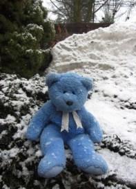 Blue Bear in snow
