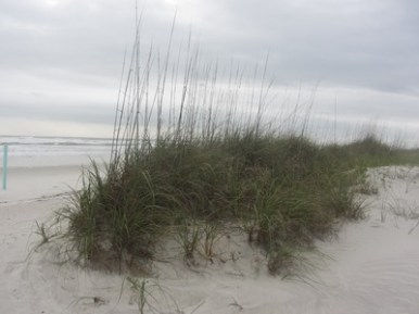 Dune grasses, Canaveral National Seashore