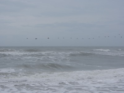 Pelicans over stormy surf, Canaveral National Seashore