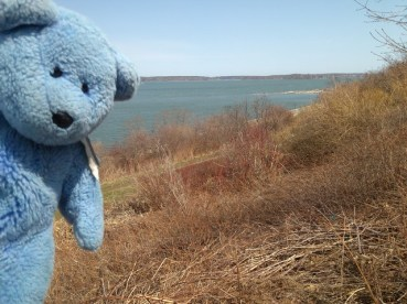 Blue Bear, Back Bay, Portland, Maine