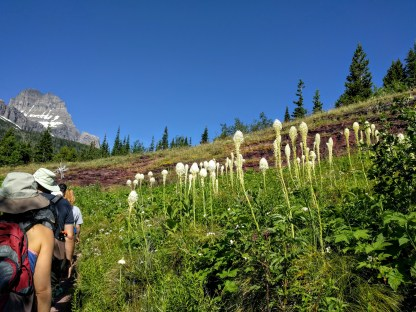 Bear grass and wildflowers, Iceberg Lake trail