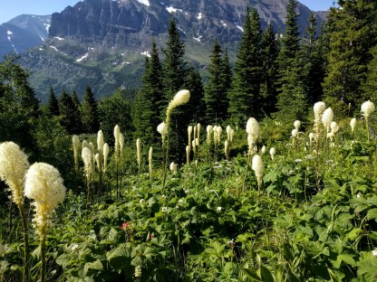Bear grass and 360 degree views