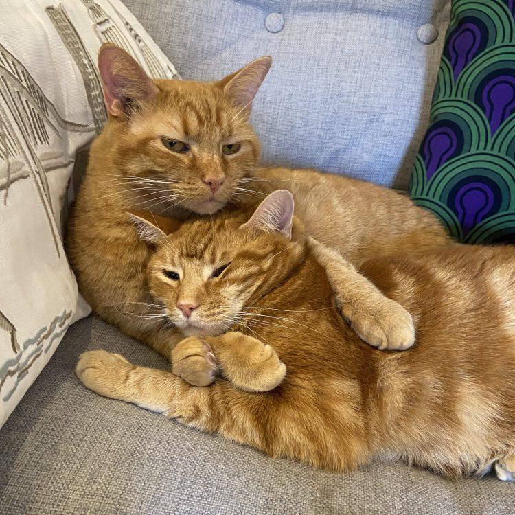 Cheddar & Linus