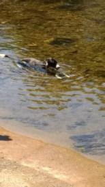 Super cool! Me frend Jasper lyin down in the river