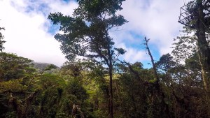 A glimpse into Monteverde Cloud Forest