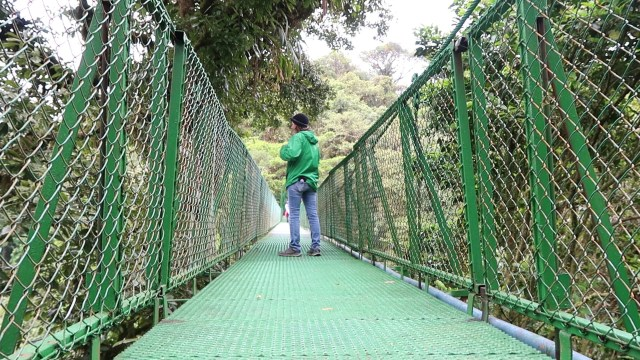 Hanging-Bridge-In-Monteverde-
