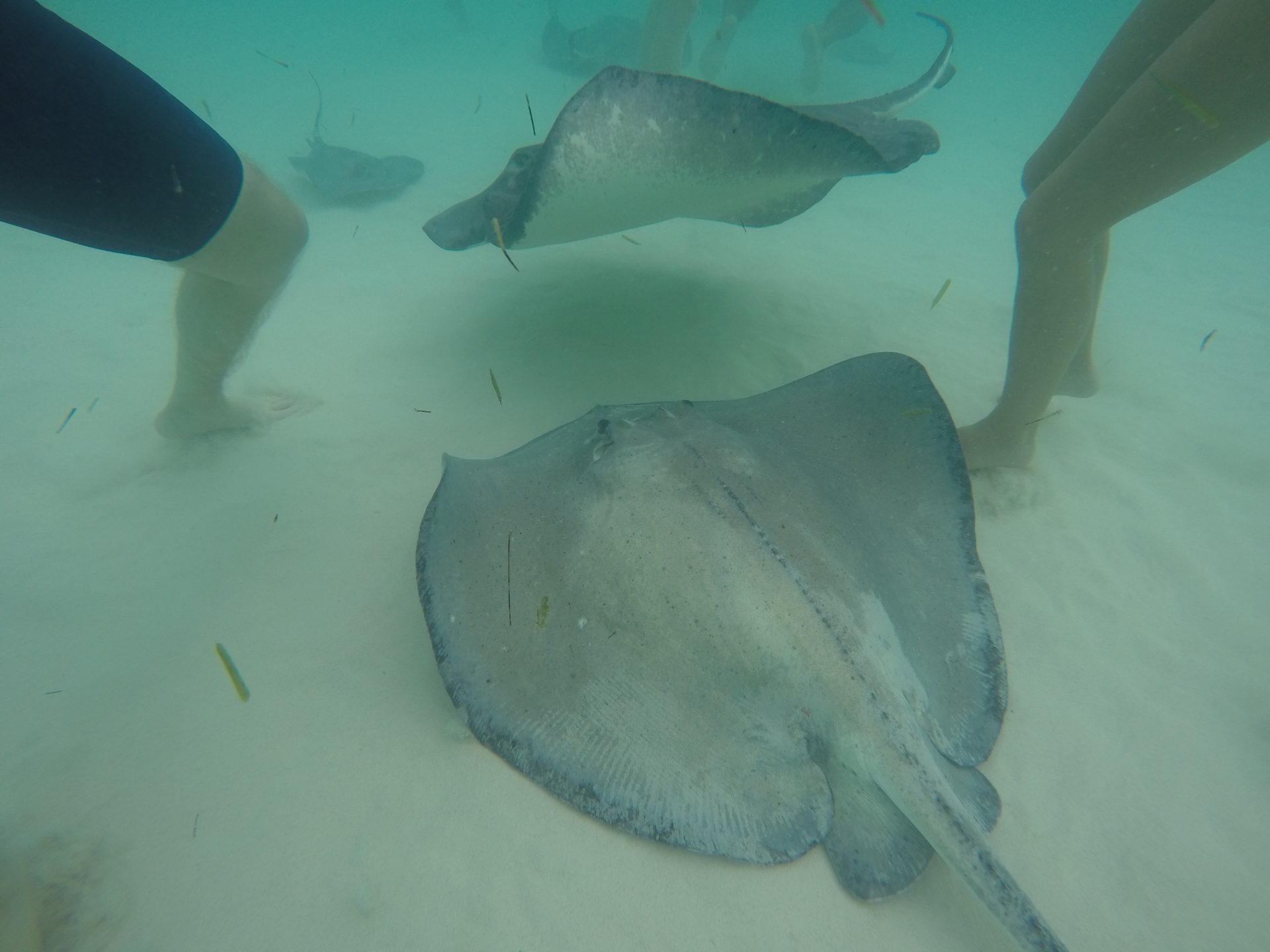 Stingrays-City-Grand-Cayman-With-People