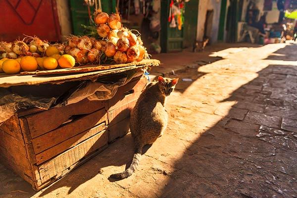 Moroccan Market Cat