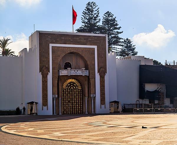 Morocco Mosque Cat
