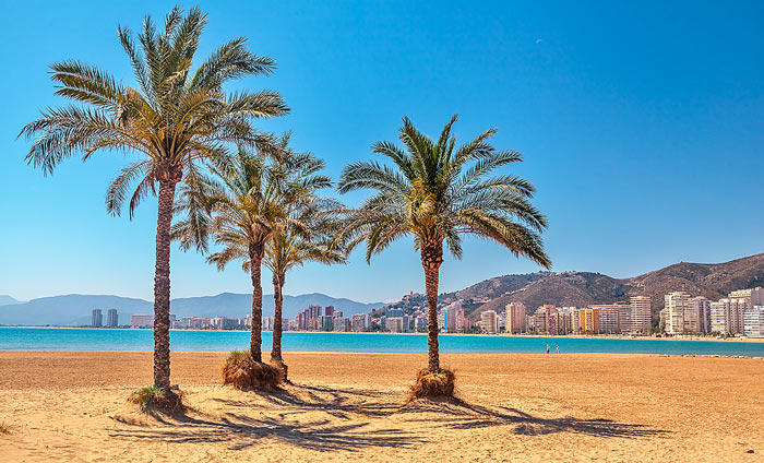 Cullera Beach Palm Trees