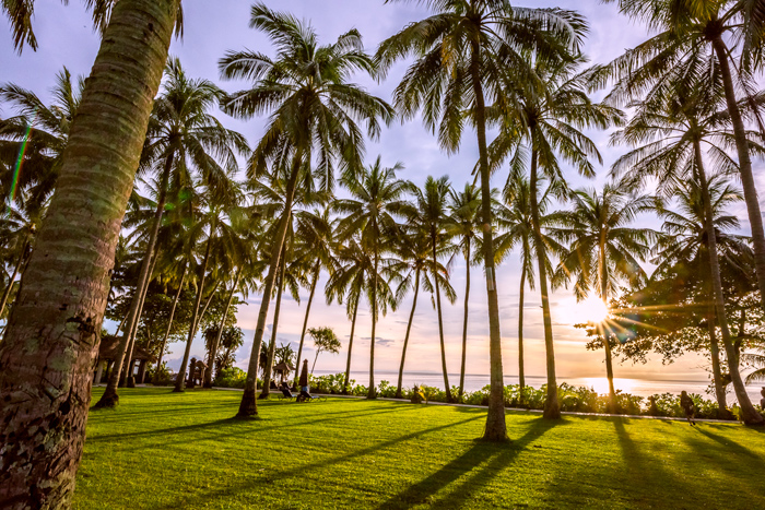 Palm Trees Oceanfront
