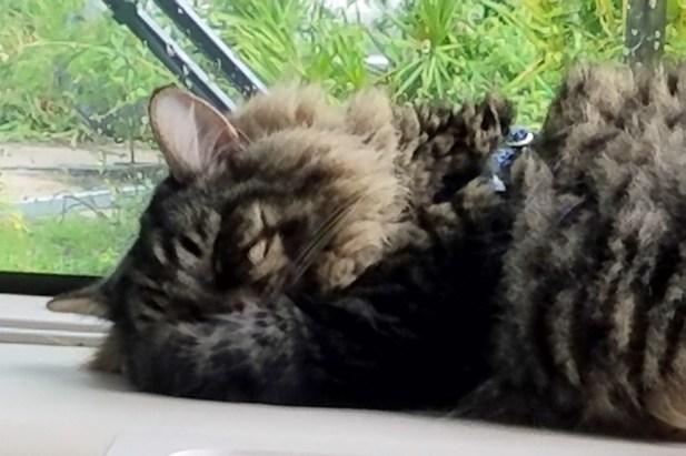 RV Cat (2)