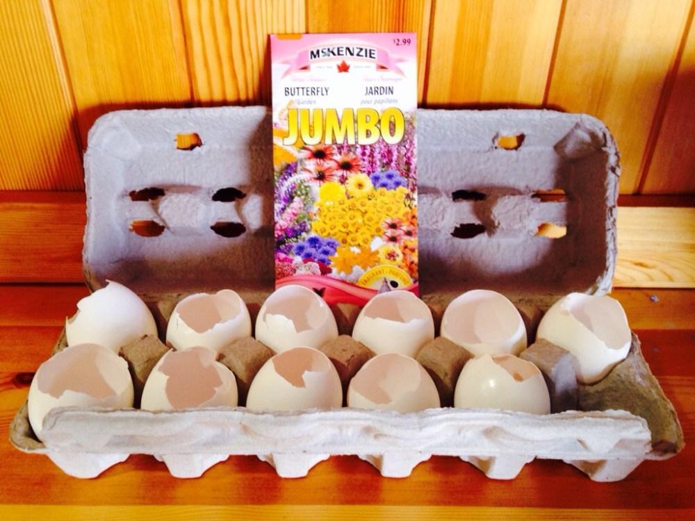 DIY: egg shell planters (1/6)