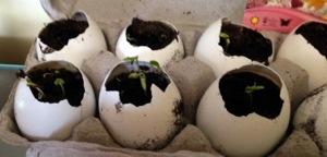DIY: egg shell planters (5/6)