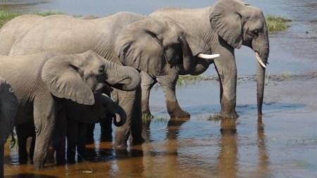 Safari in Ruaha Tanzania