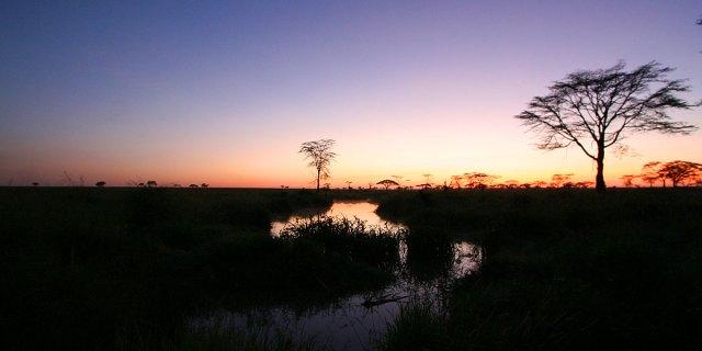 7 Day Group Safari in Tanzania