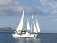 Galapagos Cachalote