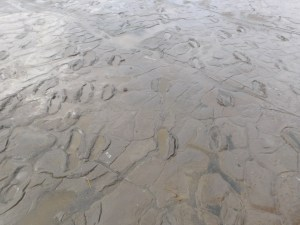 120,000 year-old footprints after a recent rain in Lake Natron